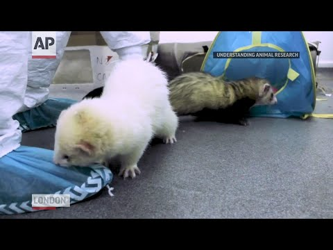 , title : 'Ferrets offer needed clues in COVID-19 vaccine race