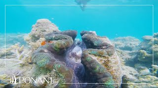 Ponant Cruises: Coral in Oceania with Katia Nicolet