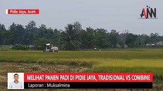 Melihat Panen Padi di Pidie Jaya, Tradisional vs Combine