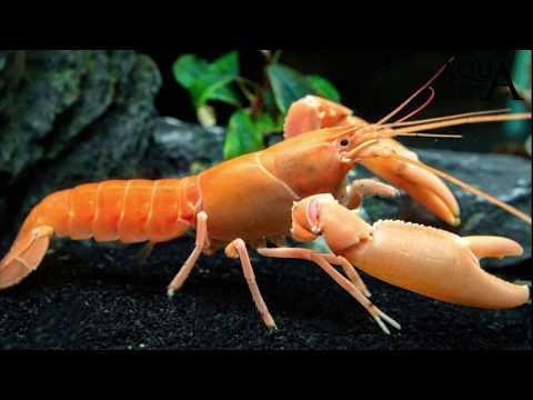 Laglio di vermi uccide o come in un organismo