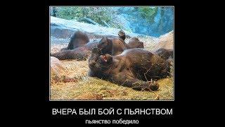 Прикольные Демотиваторы выпуск 77