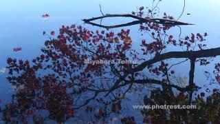 紅葉の屈斜路湖