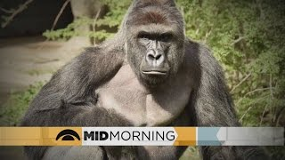 Mid-Morning Panel: Why Are Gorillas Endangered?