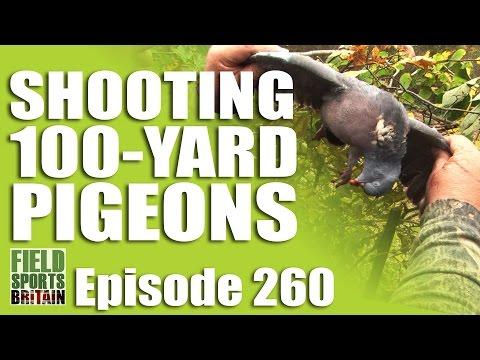 Fieldsports Britain – Shooting 100-yard Pigeons