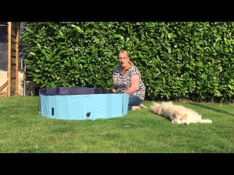 pfotenkontakte.de testet einen Pool für Hunde