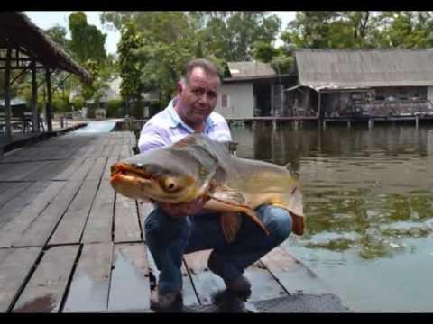 La pesca sul serbatoio di Mozhaisk nellestate di video