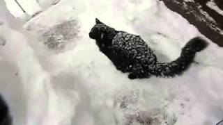 Black Cat Disappears In Snow