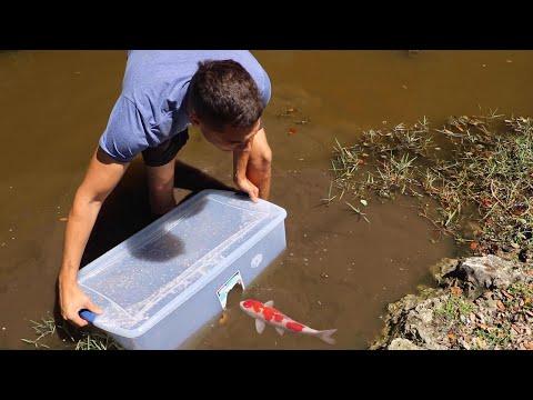 FISH-TRAP CATCHES COLORFUL FISH For Massive AQUARIUM FISH!!