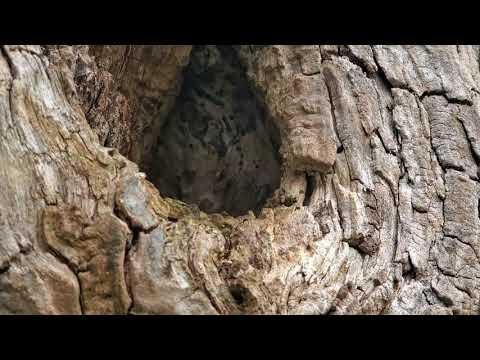 Searching for Carpenter Ants in Hazlet, NJ