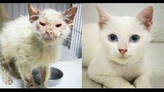 Please Help The Suffering Cats Of Thailand