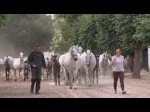 , title : 'Czech stud farm added to UNESCO World Heritage List