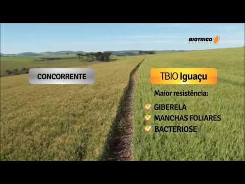 TBIO Iguaçu - Paraná Safra 2013 - Excelente resistência a Giberela