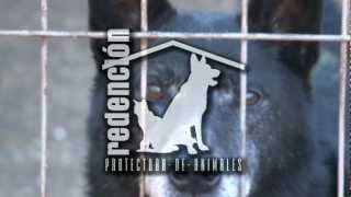 preview picture of video 'PROTECTORA DE ANIMALES DE SORIA REDENCION'