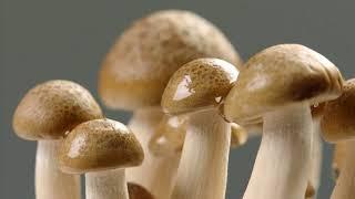[과학상식] 과학할고양 - 버섯