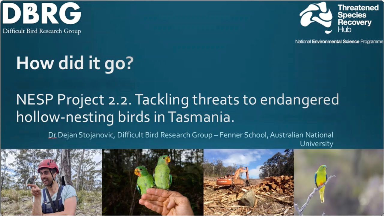 Tackling threats to endangered hollow-nesting birds in Tasmania