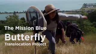 Mission Blue Butterfly Translocation Project