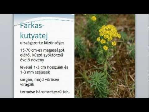 Paraziták ózonterápia