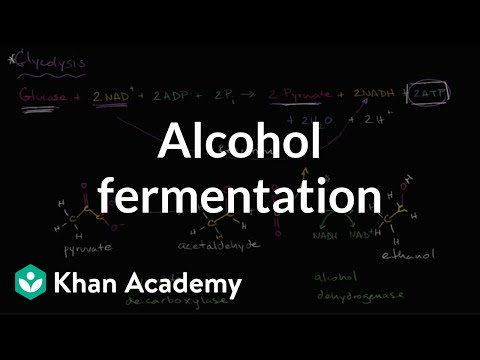 Alcohol Or Ethanol Fermentation Video Khan Academy