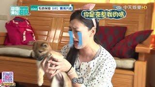 2016.05.29《寵物大聯萌》完整版 好動失控小柴犬逼瘋邵庭 杜力遇到兄弟了嗎?!