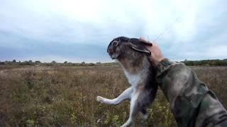 Как поймать зайцев в живую на ловушку
