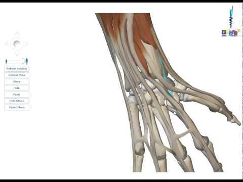 Le fitnes lentraînement de force sur tous les groupes des muscles de lexercice