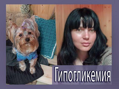 Гипогликемия у собак: что нужно знать