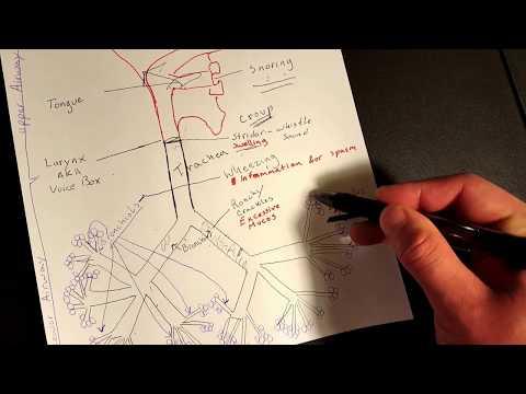 Il cane artrosi dellarticolazione del ginocchio
