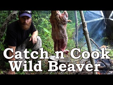 Catch n Cook WILD BEAVER!!! | BEYOND SURVIVAL | The Wilderness Living Challenge 2017 | S02E04