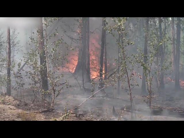 В Приангарье горит около 120 тысяч гектаров леса