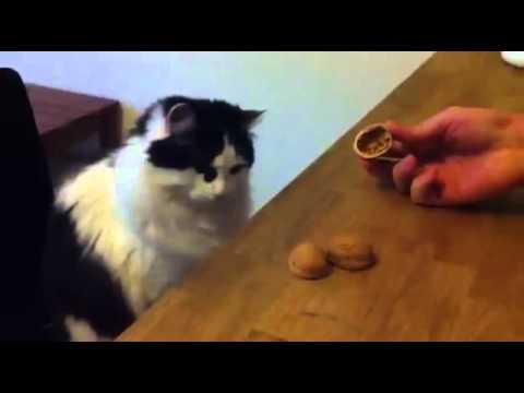 Kot hazardzista prawie nigdy się nie myli