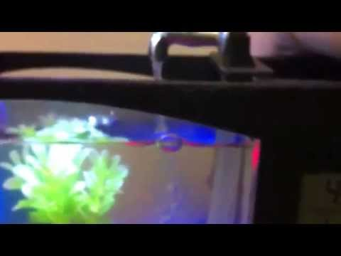 Review: usb desktop aquarium mini fish tank