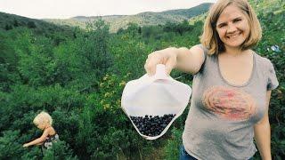 Wild Blueberry Picking (At Graveyard Fields)