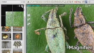 Μετρήσεις μέσω του λογισμικού DinoCapture της DINO-LITE