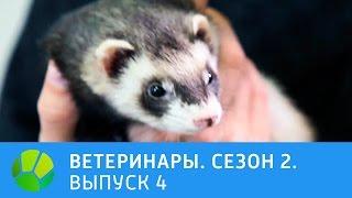 Ветеринары. Роды собаки, черепаха , хорек, лис. 2 сезон | Живая Планета