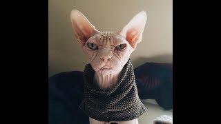 Подборка приколов с животными/ Кошки #2