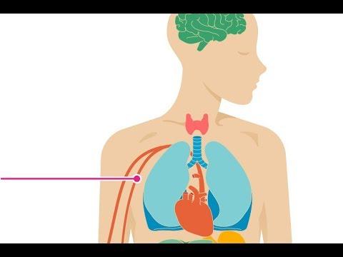 Histori e pacientëve me hipertension esencial