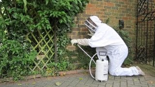 preview picture of video 'Wasp Nest Removal Woking'