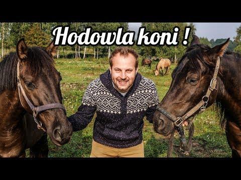 Zooapteki patogen koń