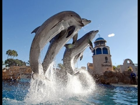A Prime Example of Why Dolphins Are So Amazing.