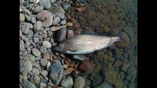 Рыбалка на енисее в хакасии