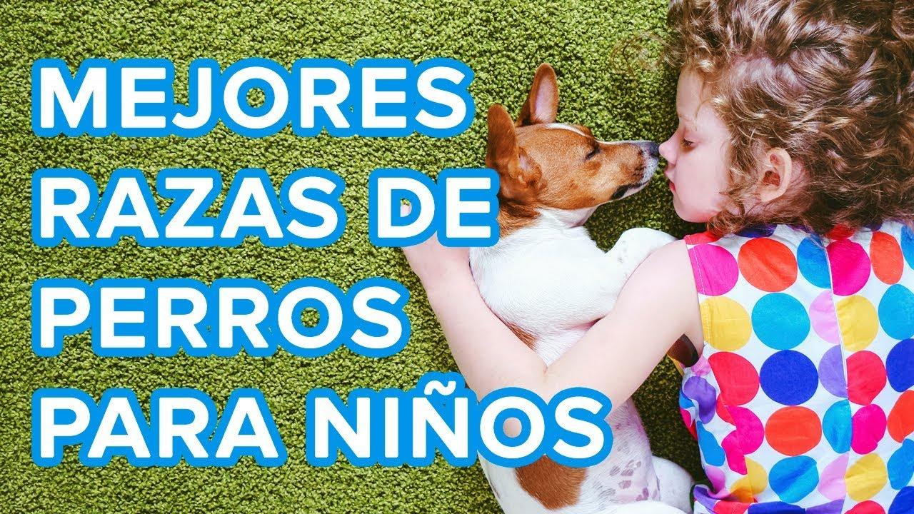 Perros y niños | Las mejores razas de perros si tienes hijos ????