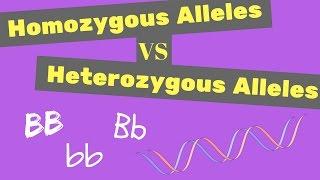 Homozygous Vs Heterozygous Alleles | Punnet Square Tips