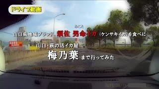 ドライブ動画/山口県・萩の活イカ屋「梅乃葉」へ行ってみた