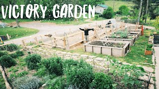 5 Ways to Start Your Pandemic Victory Garden Now
