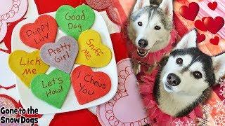 Valentine Conversation Hearts for Dogs | DIY Dog Treats 130 | Valentine's Day Dog Treats