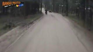 MX bike vs BEAR | Kholo.pk