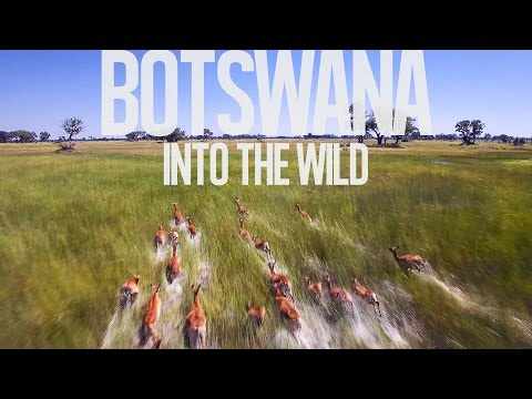 Botswana - Into The Wild