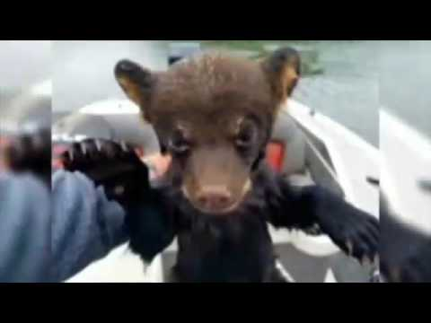 Fisherman saves bear cub from lake