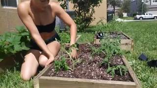 Use This Secret To Grow Your Tomatoes Faster, Bigger, And Harvest More Weight