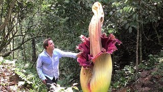 World's BIGGEST Flowers! (World's Most Spectacular Plants episode 2 of 14)